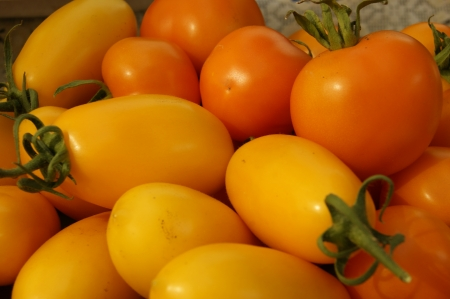 Yellow tomatoes photo