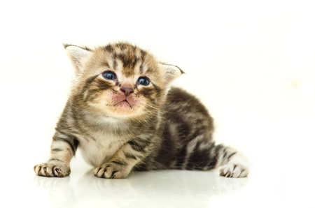 Baby Cat on white background Stock Photo - 14342550
