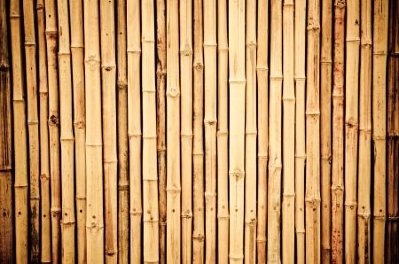 bamb�: fondo de bamb� Foto de archivo