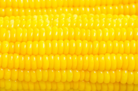 corn background, Macro closeup for design work