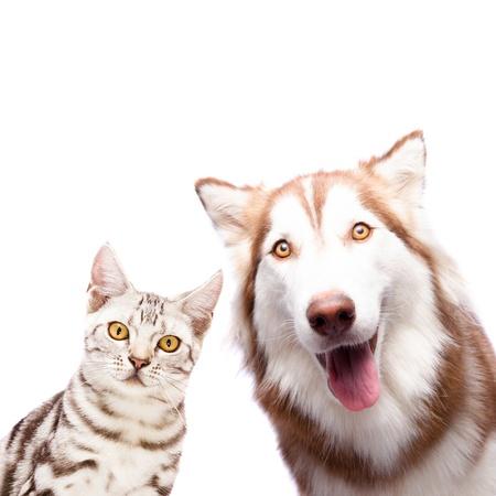犬と猫一緒に白い背景の上