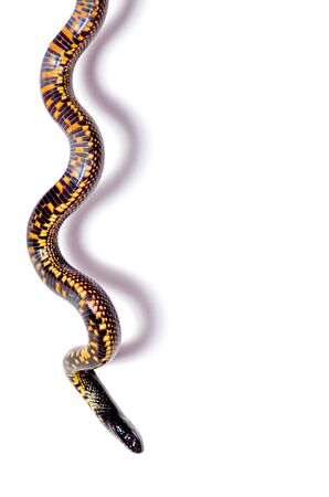 snake isolate on white background