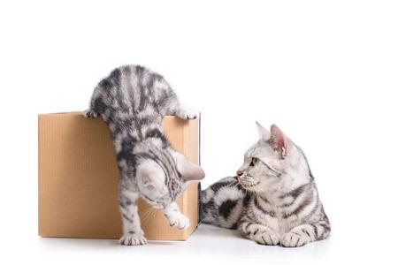 흰색 배경에 엄마 고양이와 함께 상자에 재미있는 작은 새끼 고양이