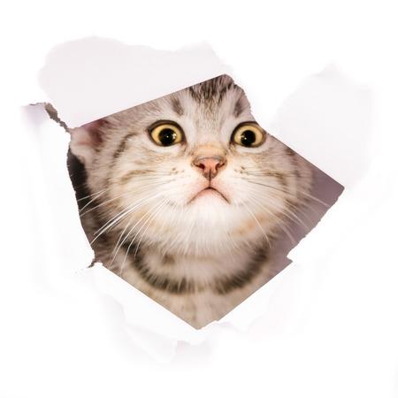 고립 된 종이 쪽 찢어진 구멍에 고양이