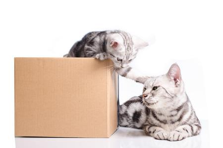 흰색에 엄마 고양이와 함께 상자에 재미있는 작은 새끼 고양이