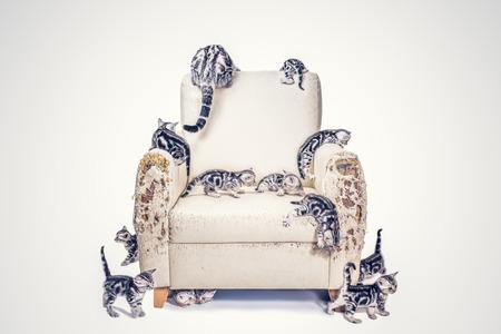 많은 미국 쇼트 헤어 새끼 고양이 fillter 효과와 함께 소파를 파괴