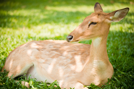 mother and baby deer: Close up of a spotted deer in forest