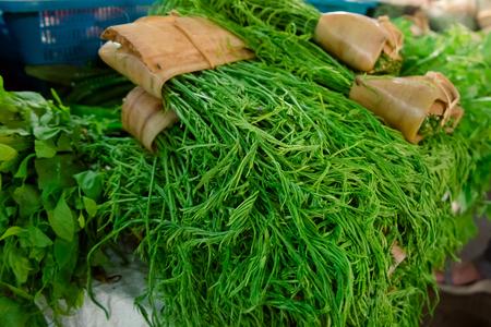 Thai local vegetable, Senegalia pennata or Acacia pennata or Cha-om (Thai Language) the market 스톡 콘텐츠