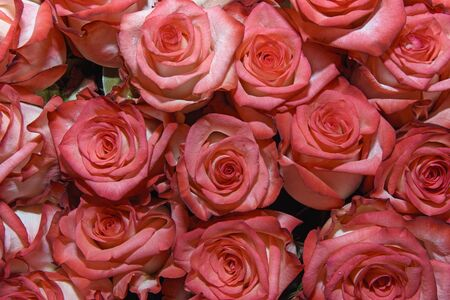 Background of bouquets of flowers. Roses. Design. Close up.