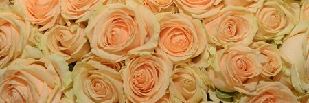 Background of bouquets of flowers. Roses. Design. Panorama. Close up. 版權商用圖片
