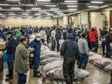 Tokyo, Japan - February 20, 2014 - A group of big tunas ready for the auction in the Tsukiji fish market, Tokyo, Japan Editorial
