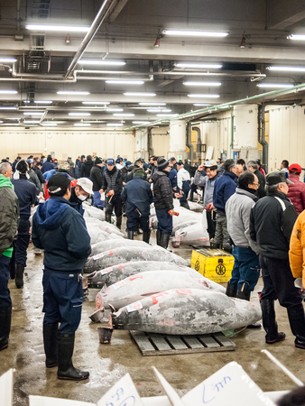 Tokyo, Japan - February 20, 2014 - A group of big tunas ready for the auction in the Tsukiji fish market, Tokyo, Japan