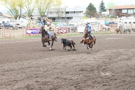 MERRITT; B.C. CANADA - MAY 15: Cowboy roping event at Nicola Valley Rodeo May 15; 2011 in Merritt British Columbia; Canada