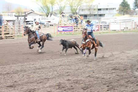 MERRITT; B.C. CANADA - MAY 15: Cowboy roping event at Nicola Valley Rodeo May 15; 2011 in Merritt British Columbia; Canada