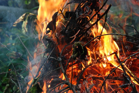 blazes: Blazes campfire from branches leafy tree