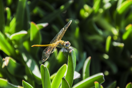 Dragonfly in the park