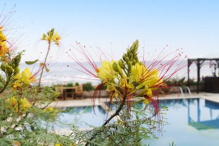 수영장에서 꽃