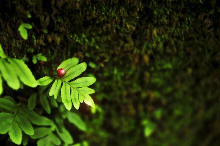 Red fruit on green leaf