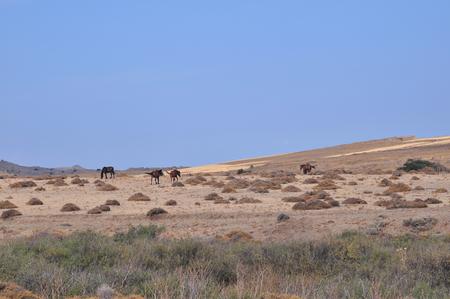 野生の馬が野原で放牧