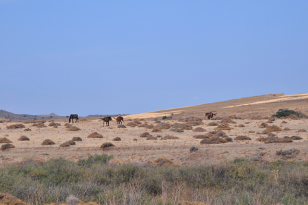 Wild horses grazing on the field
