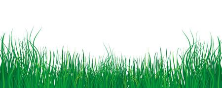 Grass on white background Vector illustration. Illustration