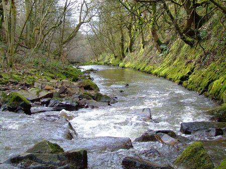 River Woodlands