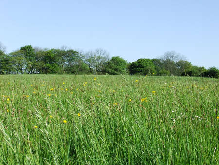 Fields,