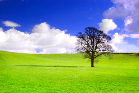 Lone tree in green meadow with blue sky and fluffy white clouds. Stock Photo - 3260544
