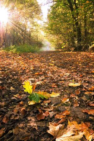 低木を通して輝く太陽と落ち葉で森林車線カーペットの敷かれたを撮影し、レーンに沿った距離でミストします。