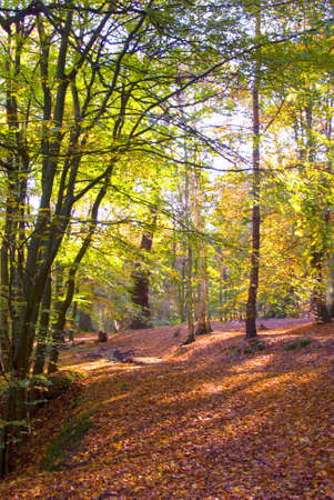 English woodland scene in autumn with bright, warm sunlight showing through the tree canopy.