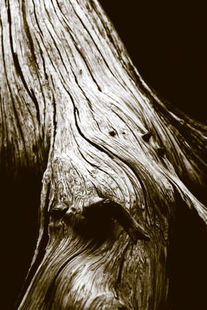Detail of grainy old tree trunk. [Rendered in duotone.]