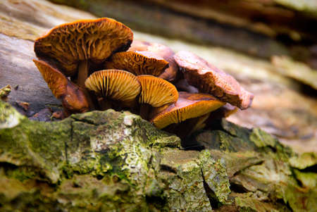 Group of fungi clinging to the side of fallen tree trunk. photo