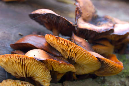 Group of fungi clinging to side of fallen tree trunk. photo