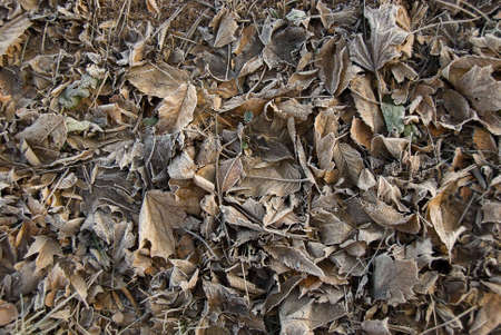 Frosty leaves lying on ground creating random pattern. photo