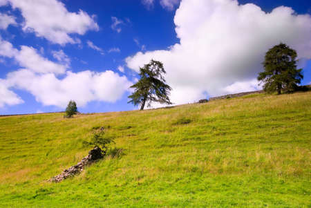 White clouds in blue sky over trees Stock Photo
