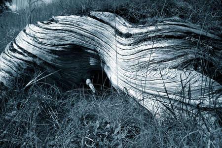 Grainy tree stump in black and white Stock Photo