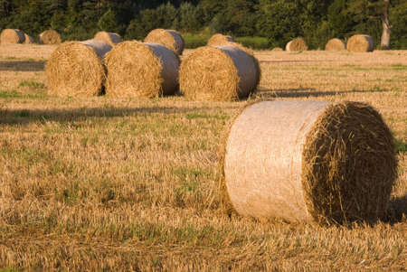 Hay bails in hay field at harvest time