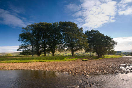 ure: Group of trees on the banks of the River Ure near Hawes, Yorkshire Dales National Park, United Kingdom on a summers day
