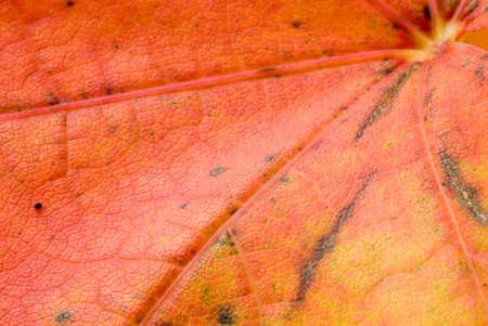 Maple hojas en colores oto�ales  Foto de archivo - 3294666
