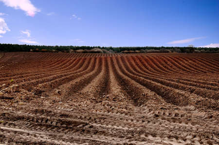 Newly ploughed field ready for new crops Stock Photo - 3294717