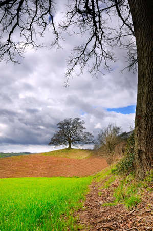 Lone tree standing in newly prepared field at springtime photo