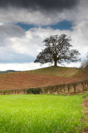 Lone tree standing in newly prepared field at springtime