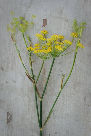 Still life photo of anise flower on a wooden board