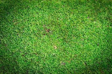 Green moss or algae background on dark corner and soft light  photo