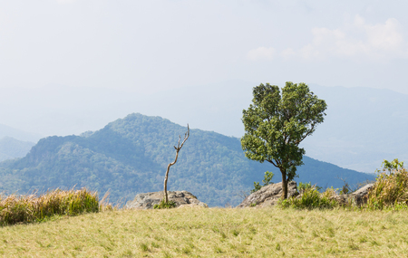 Green Tree with Dried Tree Grass Field Mountain Sky and Cloud at Phu Chi Fa Forest Park. Landscape Phu Chi Fa Forest Park view point Chiang Rai northern Thailand travel Banco de Imagens