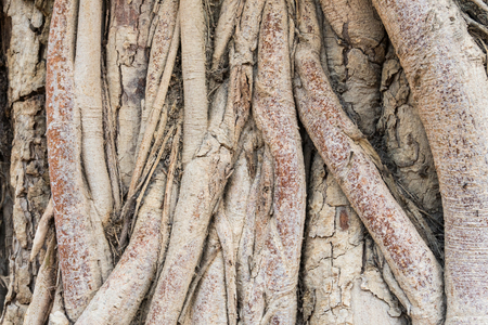 Old Tree Roots Background. Brown tree roots texture for design. Natural Tree roots backdrop Banco de Imagens