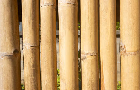 Bamboo Texture Background with Outdoor Warm Natural Light