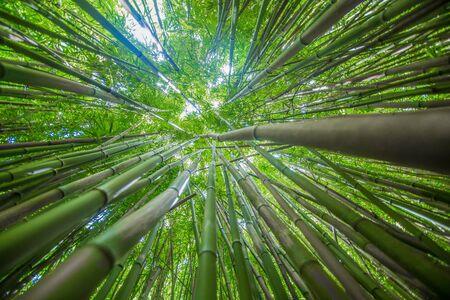 竹 写真素材 - 90153281