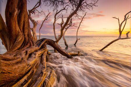 fallen tree into ocean Foto de archivo