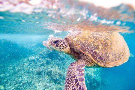 turtle breath
